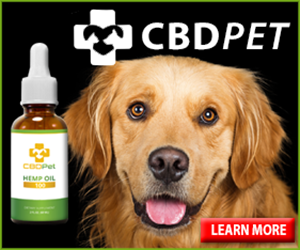 CBD Oil For Dogs And Pets